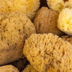 Natural Sea Sponge Uses Collection of Sponges