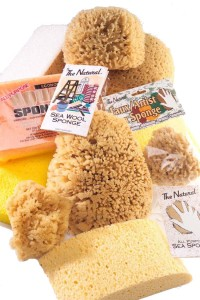 Acme Brand Sponge Collection