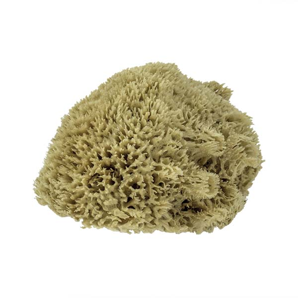 The Natural Brand - Wool Sea Sponge 11-12 Inch SW #1-1112C | Side 3