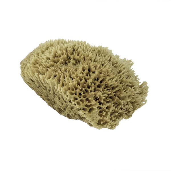 The Natural Brand - Wool Sea Sponge 11-12 Inch SW #1-1112C | Side 2