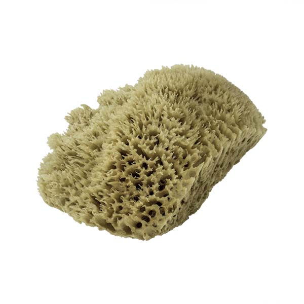 The Natural Brand - Wool Sea Sponge 11-12 Inch SW #1-1112C | Side 1