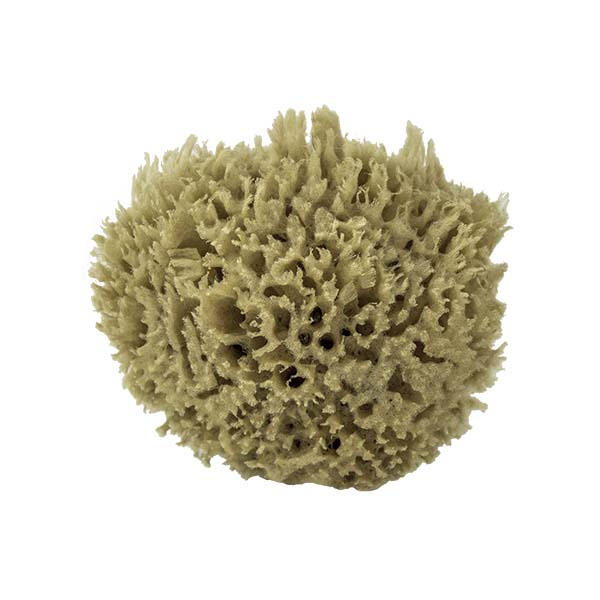 The Natural Brand - Wool Sea Sponge 4-5 Inch SW #1-4050C | Top