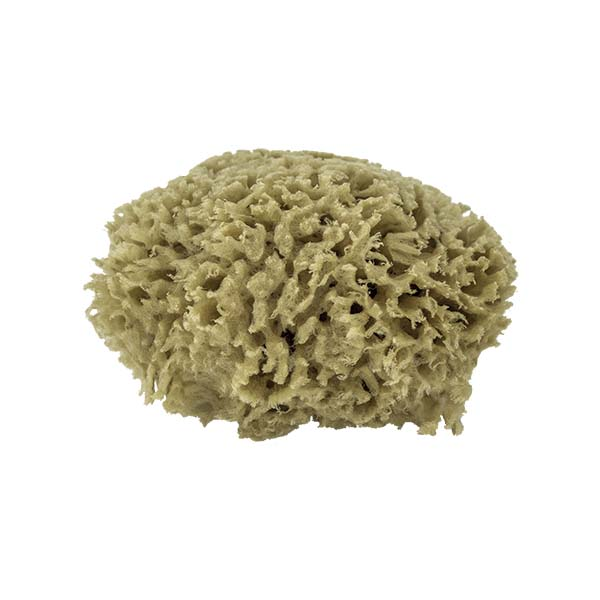The Natural Brand - Wool Sea Sponge 4-5 Inch SW #1-4050C | Side 2