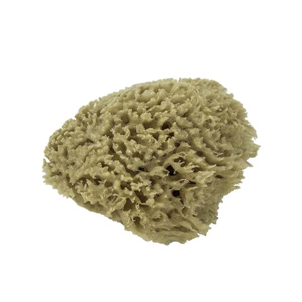 The Natural Brand - Wool Sea Sponge 4-5 Inch SW #1-4050C | Side 1