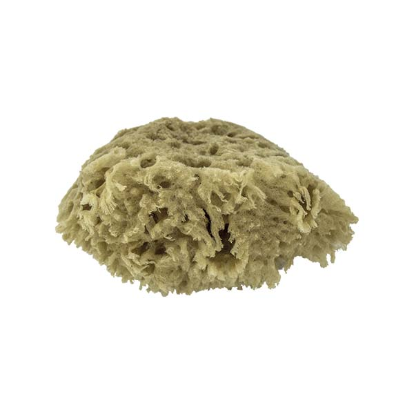 The Natural Brand - Wool Sea Sponge 4-5 Inch SW #1-4050C | Bottom