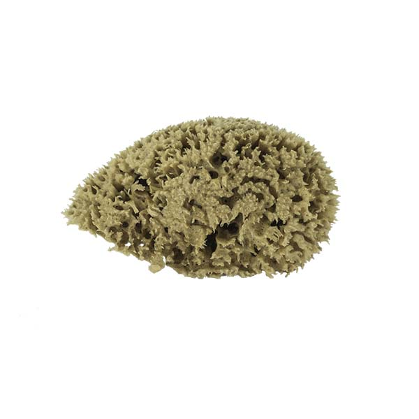 The Natural Brand - Wool Sea Sponge 5-6 Inch SW #1-5060C | Top w/o Label