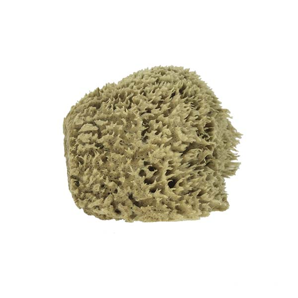 The Natural Brand - Wool Sea Sponge 5-6 Inch SW #1-5060C | Side 2 w/o Label