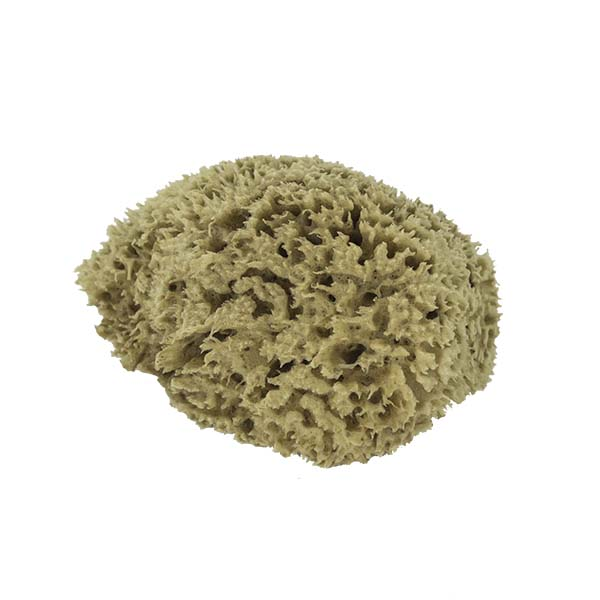 The Natural Brand - Wool Sea Sponge 5-6 Inch SW #1-5060C | Side w/o Label