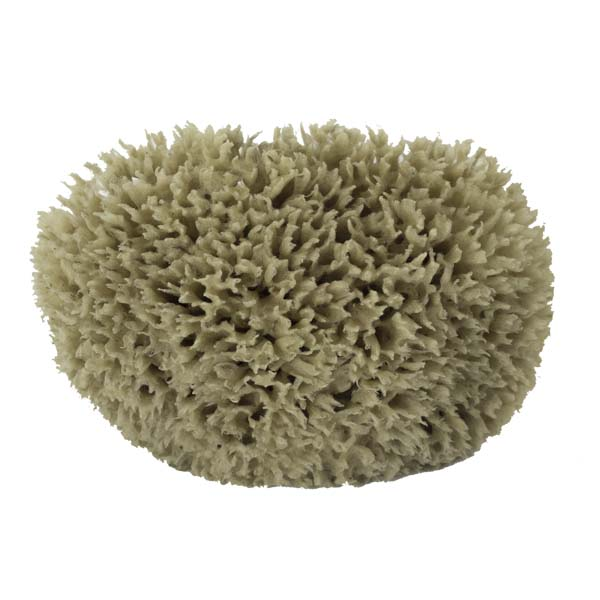 The Natural Brand - Wool Sea Sponge 6-7 Inch SW #1-7080C | Front w/o Label