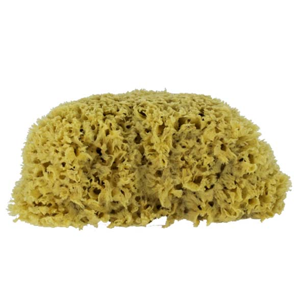 The Natural Brand - Wool Sea Sponge 5-6 Inch SW #1-1011C | Top w/oLabel
