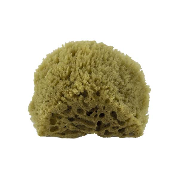 The Natural Brand - Yellow Sea Sponge 4-5 Inch Y-4050 | Bottom