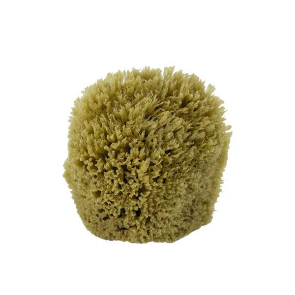 The Natural Brand - Yellow Sea Sponge 4-5 Inch Y-4050 | Front