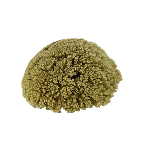 The Natural Brand - Yellow Sea Sponge 5-6 Inch Y-5060 | Top