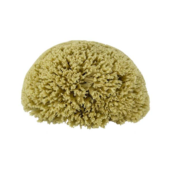 The Natural Brand - Yellow Sea Sponge 6-7 Inch Y-6070 | Top