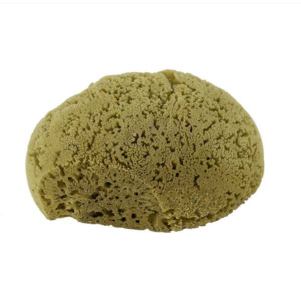 The Natural Brand - Yellow Sea Sponge 7-8 Inch Y-7080 | Bottom