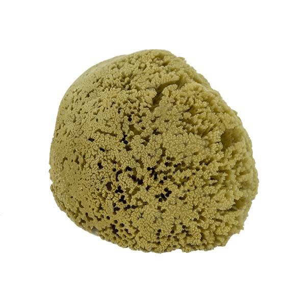 The Natural Brand - Yellow Sea Sponge 7-8 Inch Y-7080 | Side 2