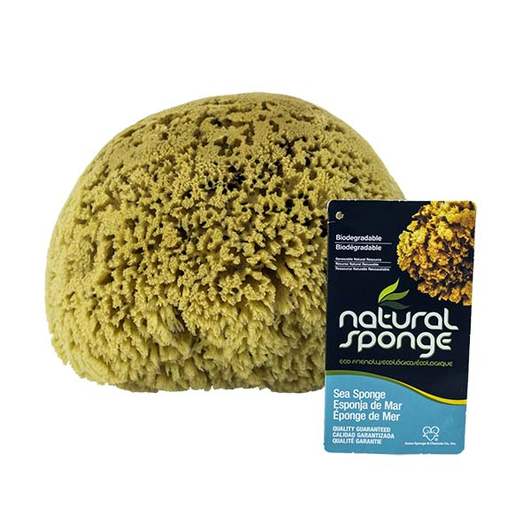 The Natural Brand - Yellow Sea Sponge 8-9 Inch Y-8090 | Front with Label