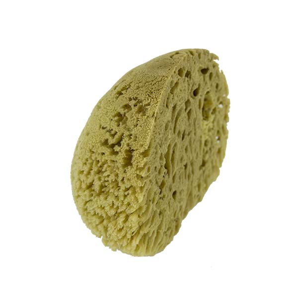 The Natural Brand - Yellow Sea Sponge 8-9 Inch Y-8090 | Side 4