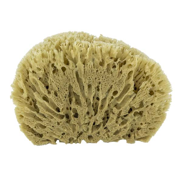 The Natural Brand - Yellow Sea Sponge 9-10 Inch Y-9010 | Back