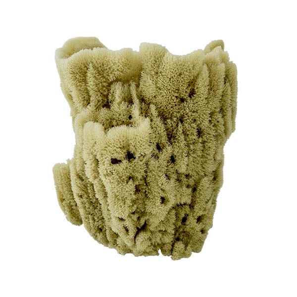 Acme Vase Sponge | Back View