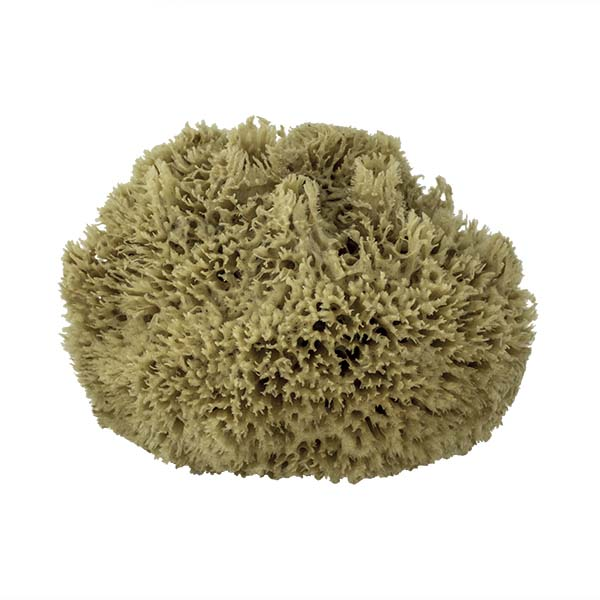 The Natural Brand - Wool Sea Sponge 11-12 Inch SW #1-1112C | Front