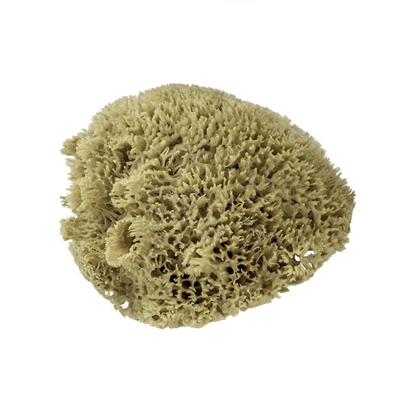 The Natural Brand - Wool Sea Sponge 11-12 Inch SW #1-1112C | Top