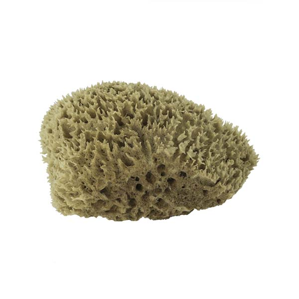 The Natural Brand - Wool Sea Sponge 5-6 Inch SW #1-5060C | Bottom w/o Label