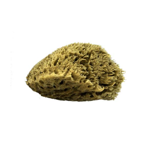The Natural Brand - Wool Sea Sponge 6-7 Inch SW #1-6070C | Side w/o Label