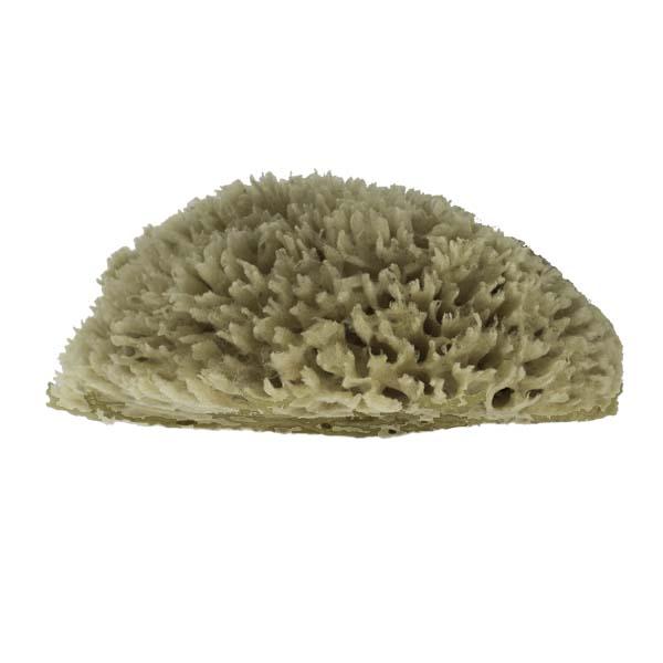 The Natural Brand - Wool Sea Sponge 6-7 Inch SW #1-7080C   Side w/o Label
