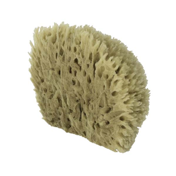 The Natural Brand - Wool Sea Sponge 6-7 Inch SW #1-7080C   Back w/o Label