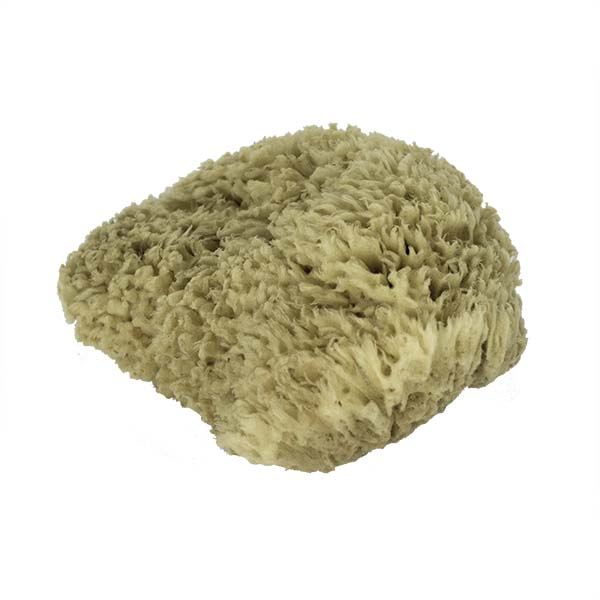 The Natural Brand - Wool Sea Sponge 9-10 Inch SW #1-9010C | Top 2 w/o Label
