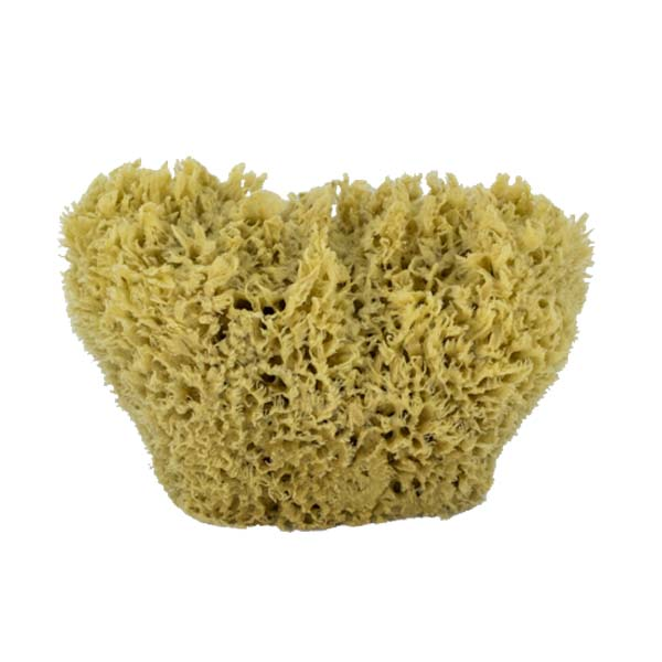 The Natural Brand - Wool Sea Sponge 5-6 Inch SW #1-1011C | Front w/o Label