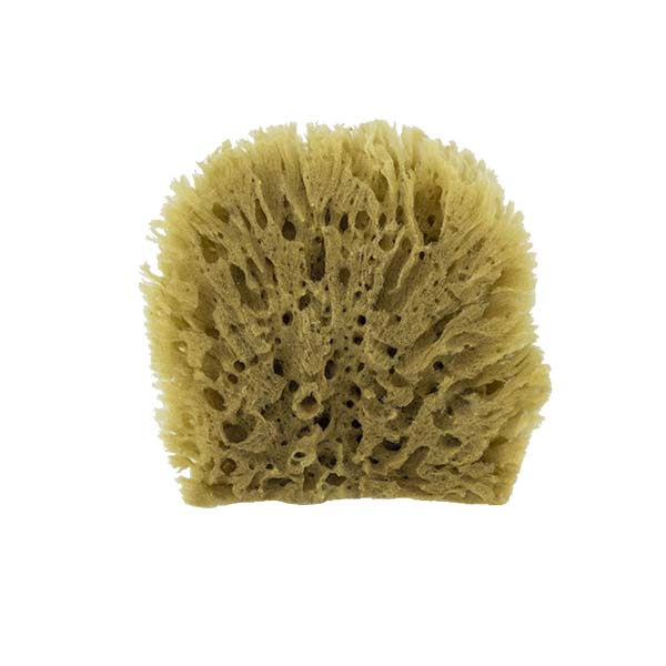 The Natural Brand - Yellow Sea Sponge 4-5 Inch Y-4050 | Back
