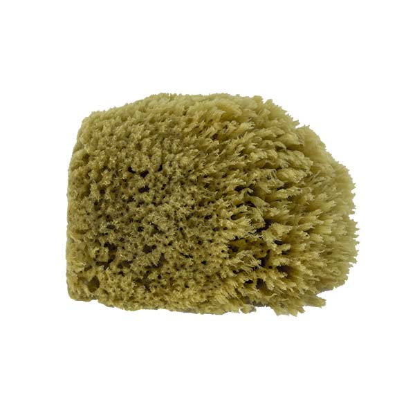 The Natural Brand - Yellow Sea Sponge 4-5 Inch Y-4050 | Side 3