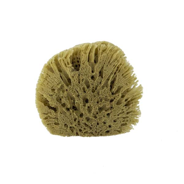 The Natural Brand - Yellow Sea Sponge 5-6 Inch Y-5060 | Back