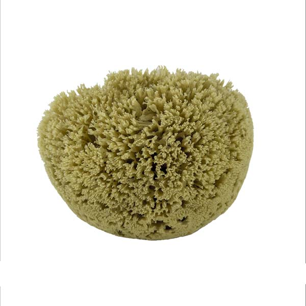 The Natural Brand - Yellow Sea Sponge 6-7 Inch Y-6070 | Front