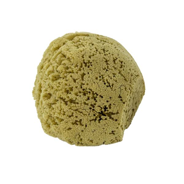 The Natural Brand - Yellow Sea Sponge 7-8 Inch Y-7080 | Side 3