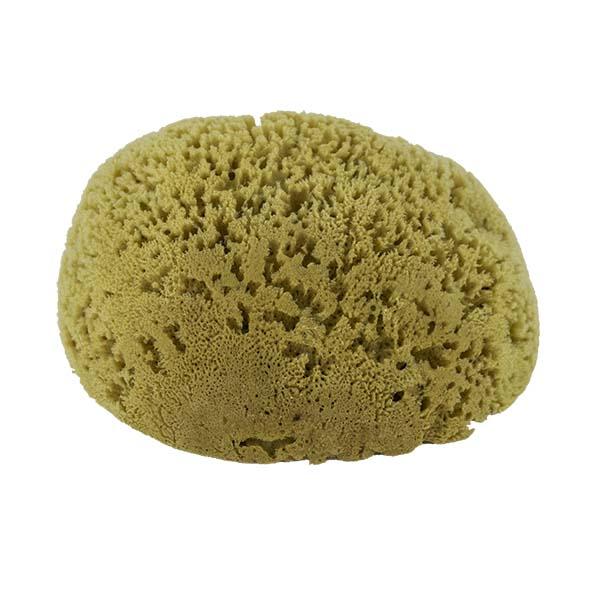 The Natural Brand - Yellow Sea Sponge 8-9 Inch Y-8090 | Bottom