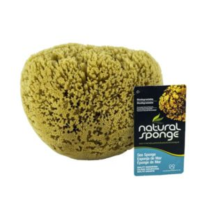 The Natural Brand - Yellow Sea Sponge 8-9 Inch Y-8090 | Front with Label 2