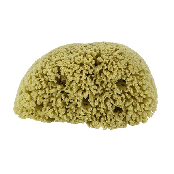 The Natural Brand - Yellow Sea Sponge 8-9 Inch Y-8090 | Top