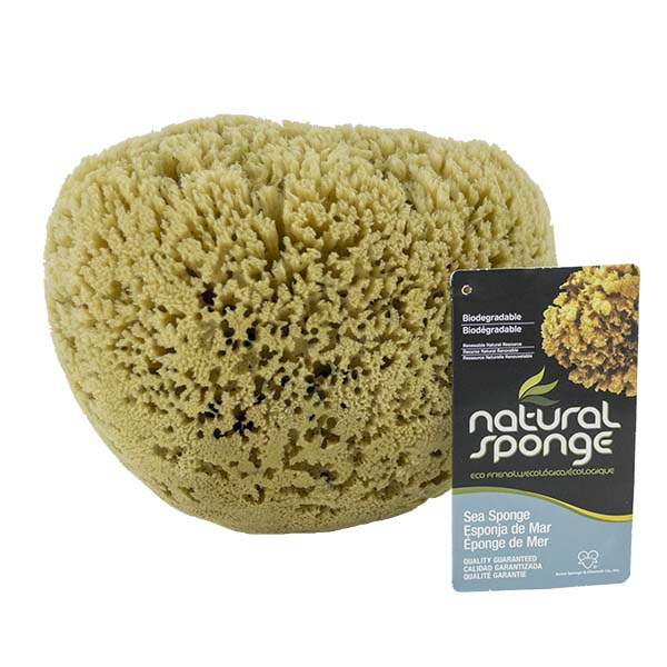 The Natural Brand - Yellow Sea Sponge 9-10 Inch Y-9010 | Front with Label