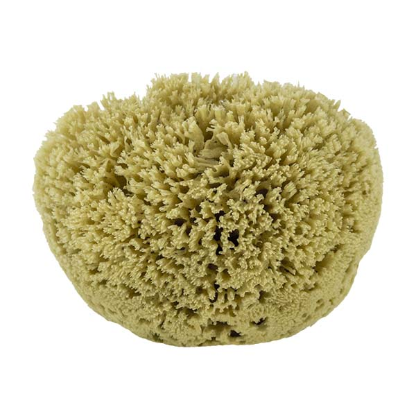 The Natural Brand - Yellow Sea Sponge 9-10 Inch Y-9010 | Front