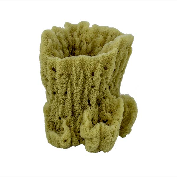 Acme Vase Sponge | Front View