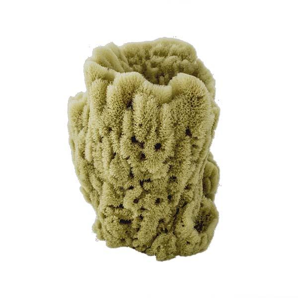 Acme Vase Sponge | Side View 1